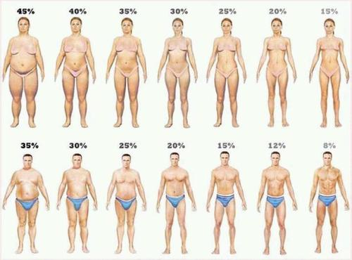how much protein visual body fat